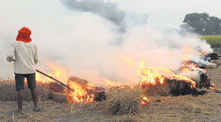 crop burning