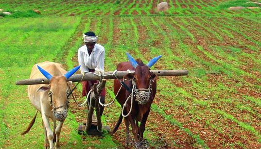 Ending farmer distress in India